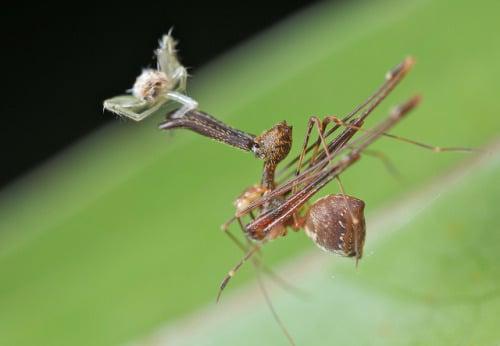 curiosidades sobre arañas extrañas