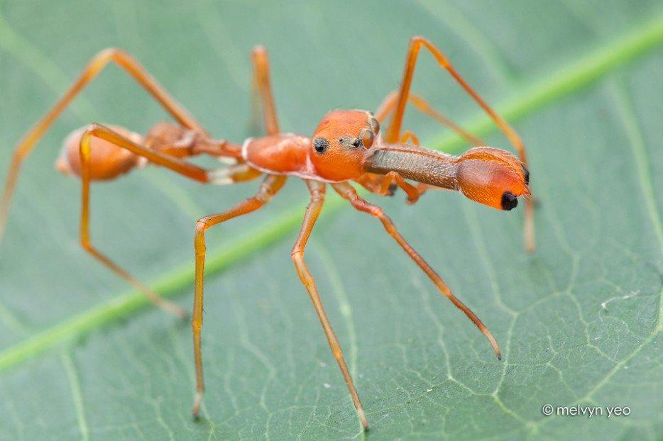 insectos y arañas raras del mundo
